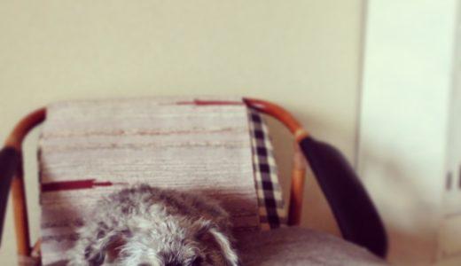 過去の自分に言いたい「ペット保険」は絶対に加入するべきと後悔