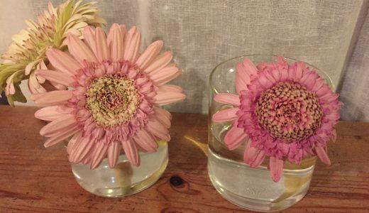 なんとなく花を使って水素水の効果を実験をしてみました