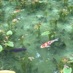 絵画のような池と話題の「モネの池」に行った素直な感想です