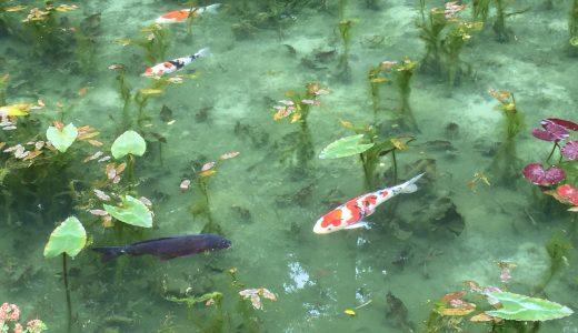 【インスタ映えには絶対にオススメ】絵画のような池と話題の「モネの池」に行った素直な感想です
