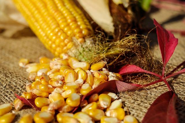 corn-1722285_640
