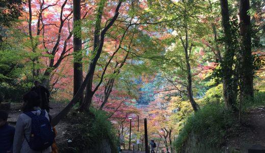 2016紅葉「香嵐渓」お出かけ情報!渋滞回避・みどころ・うまいもんを紹介