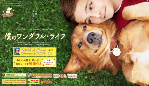 犬好きに最高な映画「僕のワンダフル・ライフ」は涙腺崩壊がハンパない